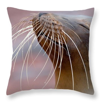 Sea Lions Throw Pillows