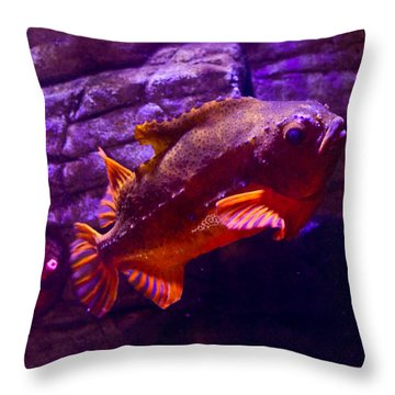 Close Up Of A Lumpfish Throw Pillow by Eti Reid