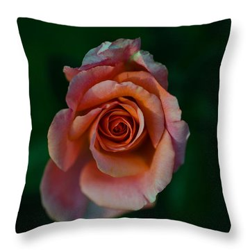 Close-up Of A Pink Rose, Beverly Hills Throw Pillow
