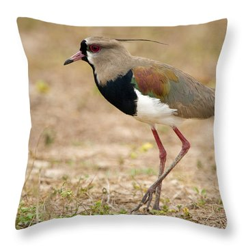 Close-up Of A Southern Lapwing Vanellus Throw Pillow