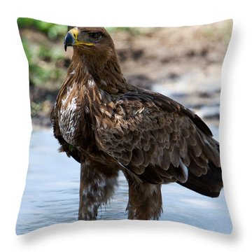 Close-up Of A Tawny Eagle Aquila Rapax Throw Pillow