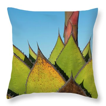 Close-up Of Agave Plant, Baja Throw Pillow