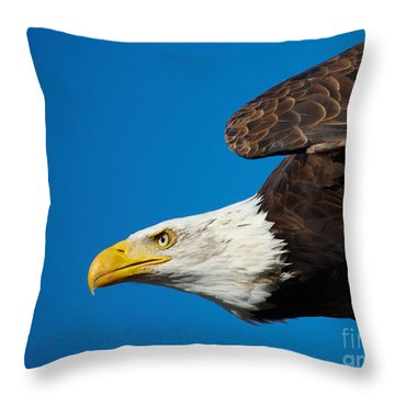 Throw Pillow featuring the photograph Close-up Of An American Bald Eagle In Flight by Nick  Biemans