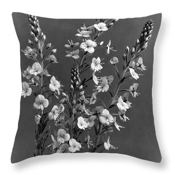 Close Up Of Gentian Speedwell Flowers Throw Pillow