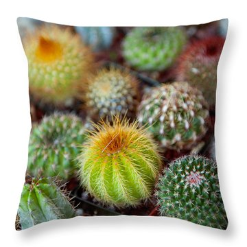Close-up Of Multi-colored Cacti Throw Pillow