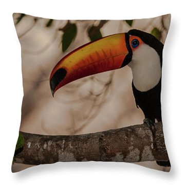 Close-up Of Tocu Toucan Ramphastos Toco Throw Pillow by Panoramic Images