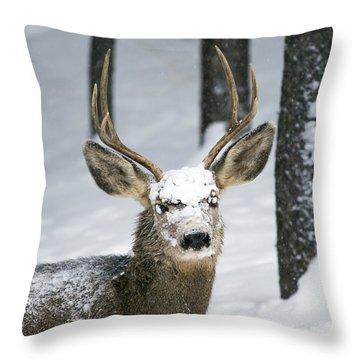 Close Up Of Winter Buck Throw Pillow