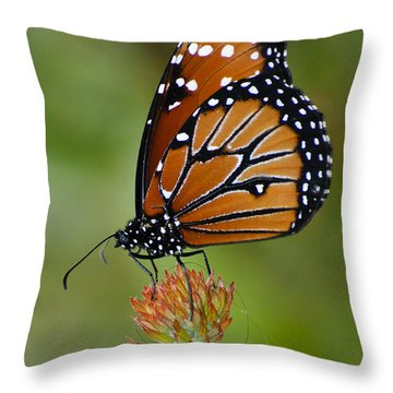 Close-up Pose Throw Pillow