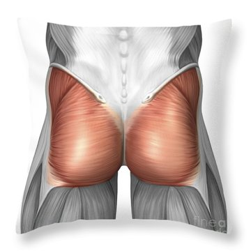 Close-up View Of Human Gluteal Muscles Throw Pillow by Stocktrek Images