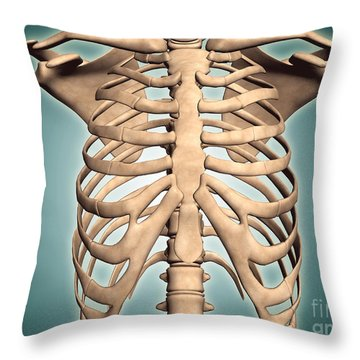 Close-up View Of Human Rib Cage Throw Pillow by Stocktrek Images