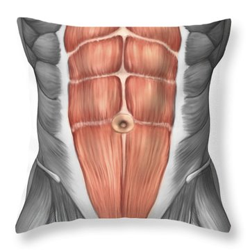 Close-up View Of Male Abdominal Muscles Throw Pillow by Stocktrek Images