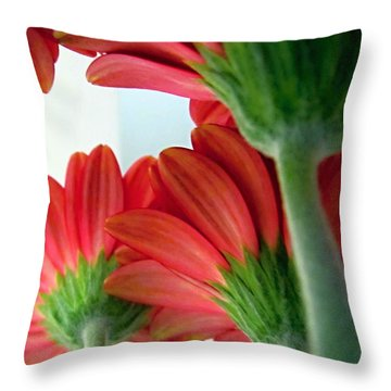 Close View From Under The Red Daisies Throw Pillow by Danielle  Parent