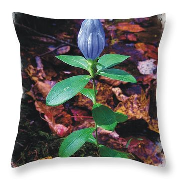 Closed Gentian Throw Pillow