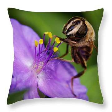 Closeup Of A Bee On A Purple Flower Throw Pillow by Nick  Biemans