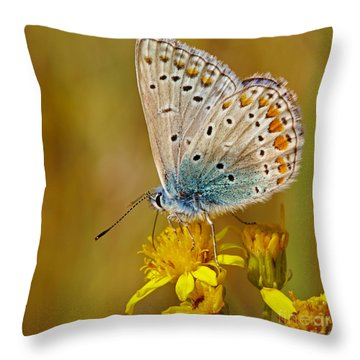 Closeup Of A Common Blue Butterfly Throw Pillow by Nick  Biemans