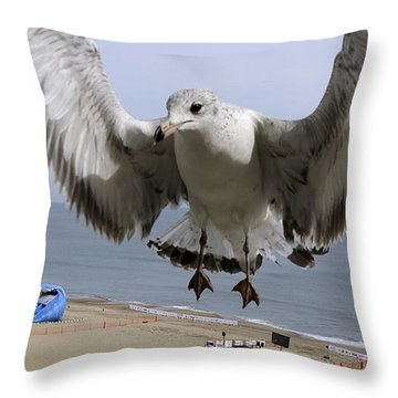 Closeup Of Hovering Seagull Throw Pillow