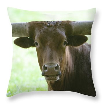 Closeup Texas Longhorn Throw Pillow