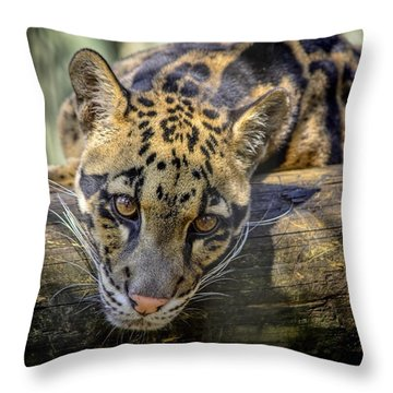 Throw Pillow featuring the photograph Clouded Leopard by Steven Sparks