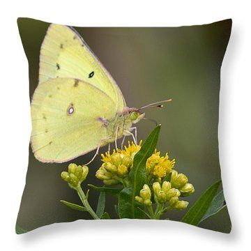 Clouded Sulphur Throw Pillow by Randy Bodkins