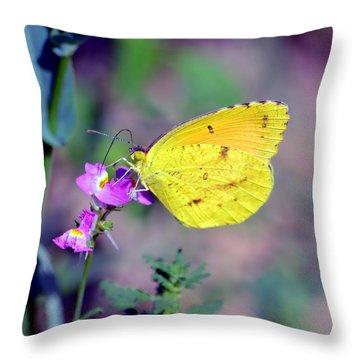 Cloudless Sulphur Throw Pillow by Deena Stoddard