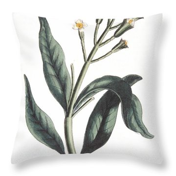 Clove Eugenia Aromatica Throw Pillow by Anonymous