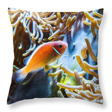 Clown Fish - Anemonefish Swimming Along A Large Anemone Amphiprion Throw Pillow by Jamie Pham