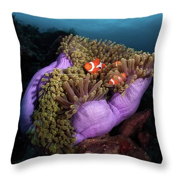 Clownfish Throw Pillows