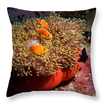 Throw Pillow featuring the photograph Clownfish by Aaron Whittemore
