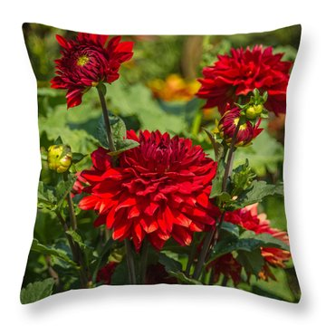 Cluster Of Dahlias Throw Pillow by Jane Luxton