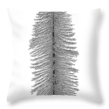 Coastal Redwood Throw Pillow