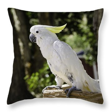 Cockatoo White Parrot Throw Pillow by LeeAnn McLaneGoetz McLaneGoetzStudioLLCcom
