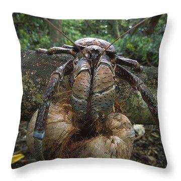 Coconut Crab Eating Palmyra Atoll Throw Pillow