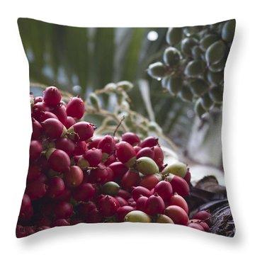 Cocos Nucifera - Niu Mikihilina - Palma - Niu - Arecaceae -  Palmae Throw Pillow by Sharon Mau