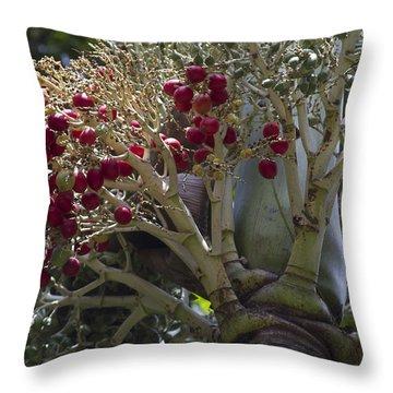 Cocos Nucifera - Niu Mikihilina - Palma Throw Pillow by Sharon Mau