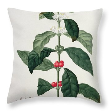 Coffea Arabica From Phytographie Throw Pillow