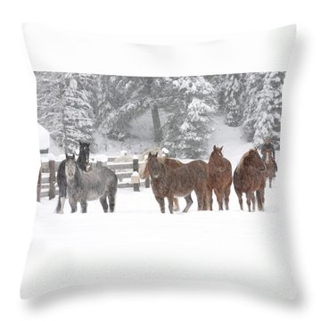 Cold Ponnies Throw Pillow by Diane Bohna