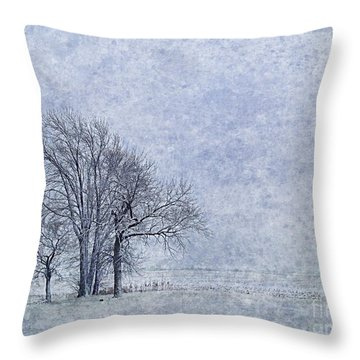 Coldness Throw Pillow by Tim Good