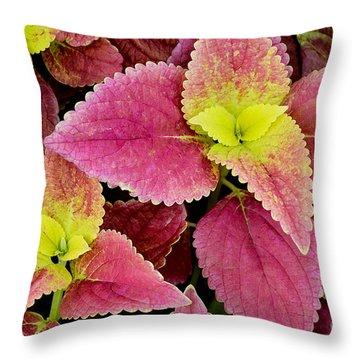 Coleus Colorfulius Throw Pillow