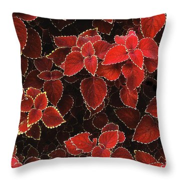 Coleus Throw Pillow by Jessica Jenney