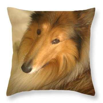 Collie Glamour Shot Throw Pillow by Suzanne Powers