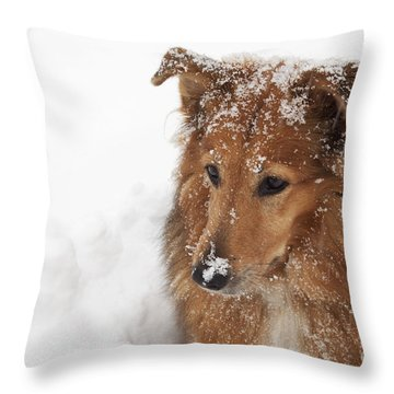 Collie In The Snow Throw Pillow by Jeannette Hunt
