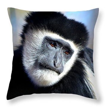 Colobus Contemplation Throw Pillow by Deena Stoddard