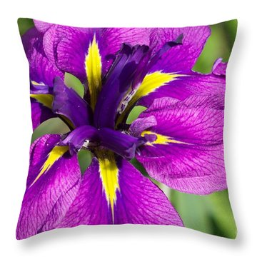 Color Explosion All Profits Go To Hospice Of The Calumet Area Throw Pillow