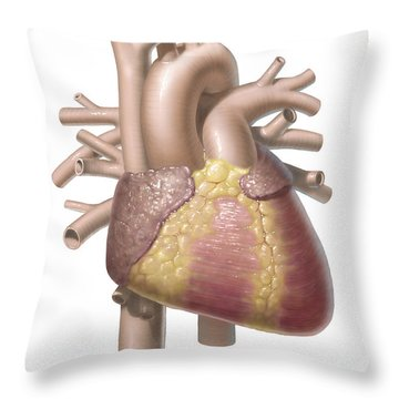 Color Illustration Of The Anterior View Throw Pillow
