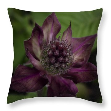 Color Purple Throw Pillow by Cris Hayes