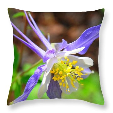 Colorado Blue Columbine Flower Throw Pillow