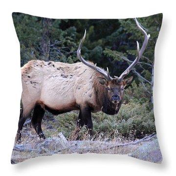 Colorado Bull Elk Throw Pillow