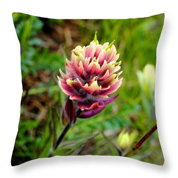 Colorado Color Throw Pillow
