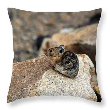 Colorado Pika Throw Pillow
