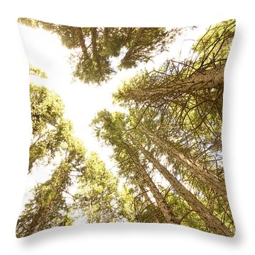 Colorado Rocky Mountain Forest Ceiling Throw Pillow by James BO  Insogna